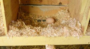 spring-egg