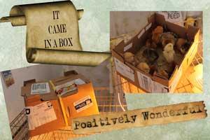 chix-box
