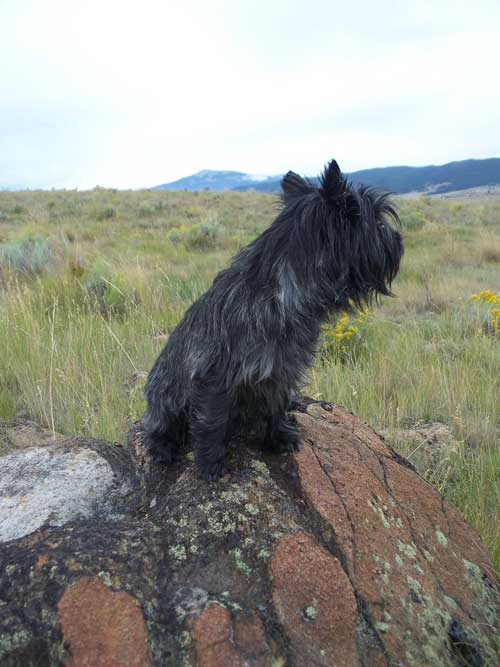 One of my favorite pictures of Harley doing what he loved sitting up on a rock looking out on the world.